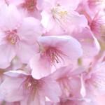 連載「日本の色で学ぶオーラソーマ」始めます